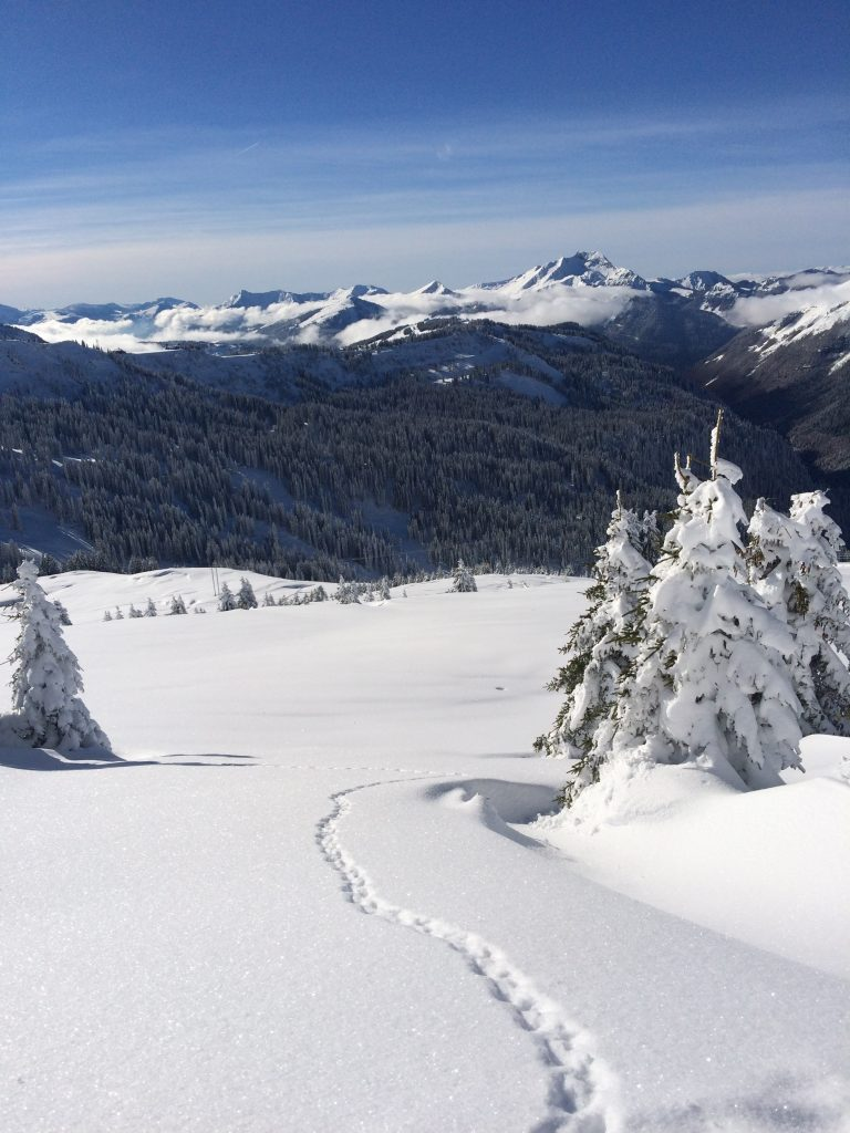 animal tracks snow