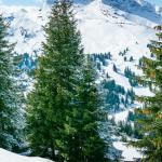 Off piste ski runs in Avoriaz