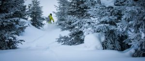 Snowboarder riding through trees in powder