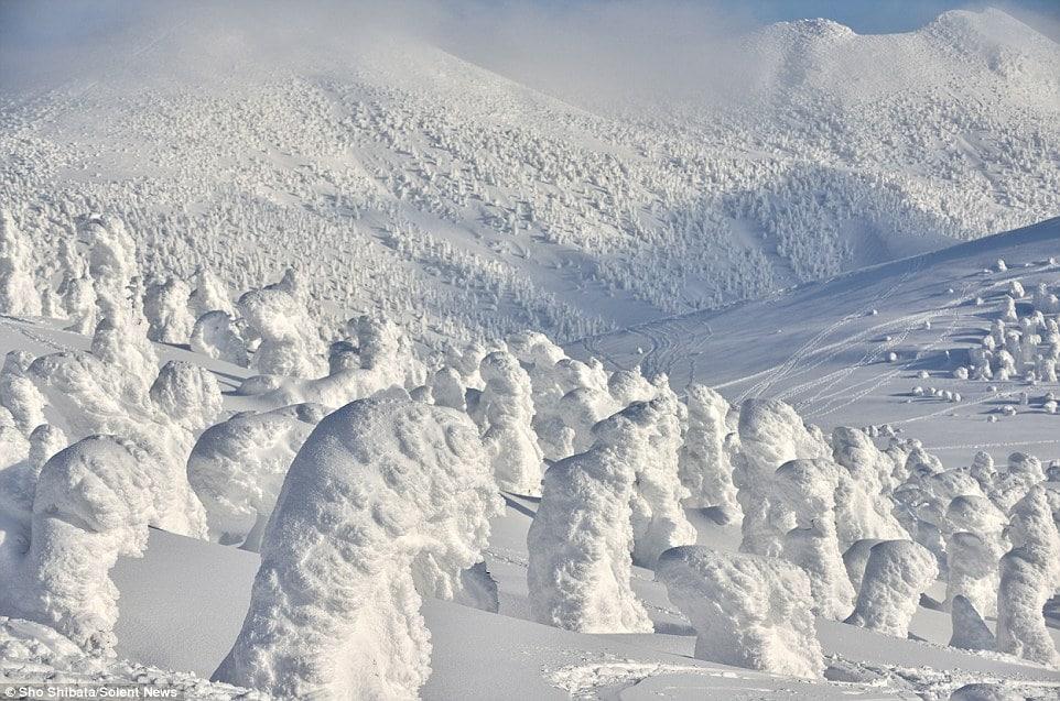 Japan Snowboard Tour