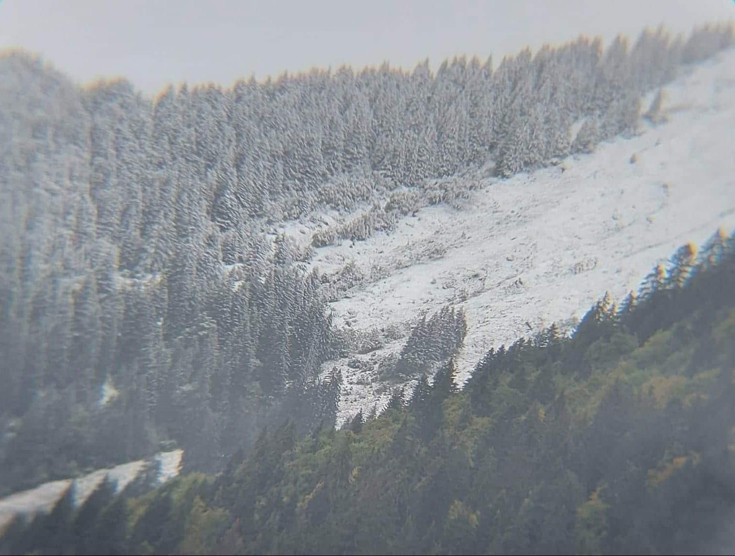 snowy trees in morzine