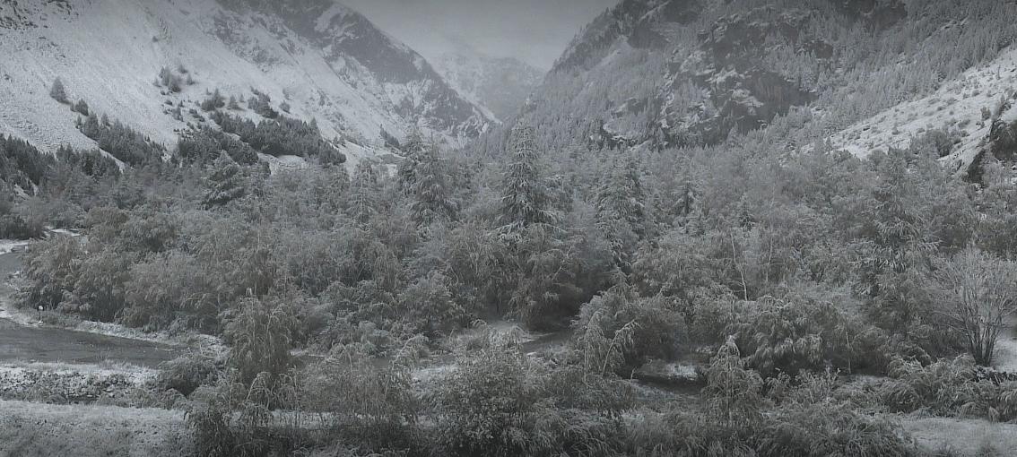 snowy trees in la grave